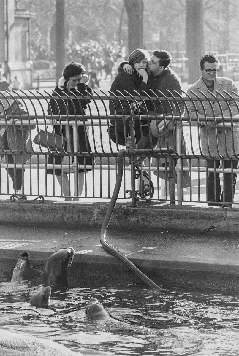 Garry Winogrand. Zoo de Central Park, Nueva York, ca.  1963. Colección Particular, España © The Estate of Garry Winogrand, courtesy Fraenkel Gallery San Francisco
