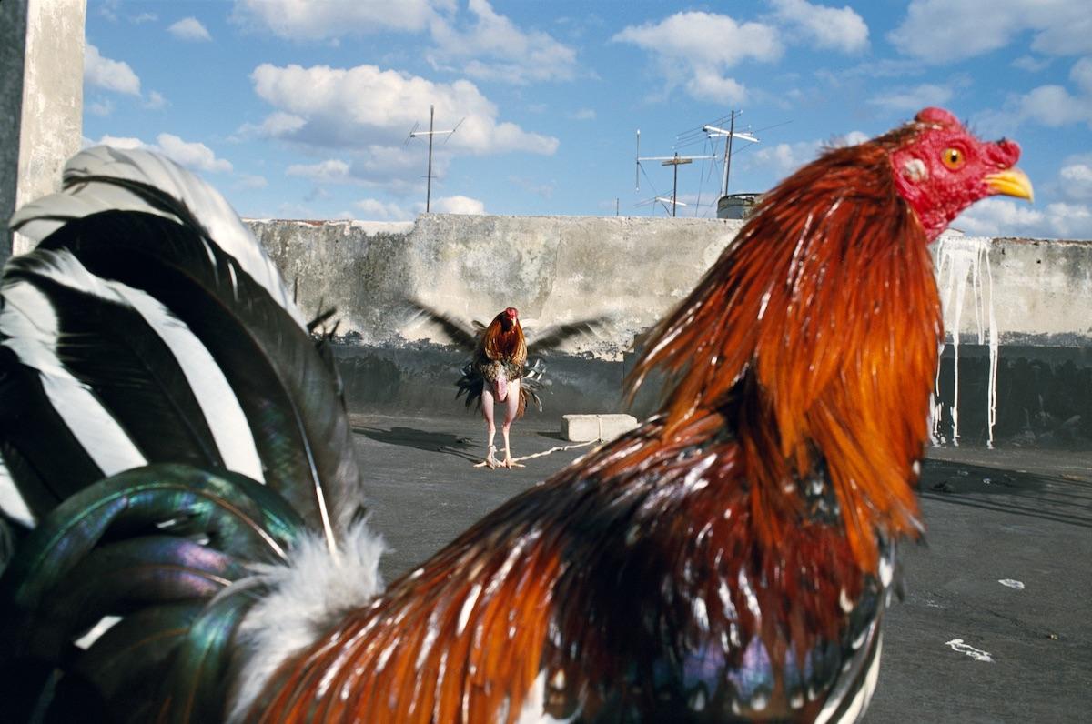 Rebecca Norris Webb. Havana, Cuba, 2008 © Rebecca Norris Webb